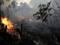 Ďalšia rana pre pľúca Zeme: Počet lesných požiarov v brazílskej Amazónii vzrástol