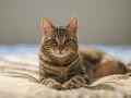 Kuriózny prípad: Mačku zadržali