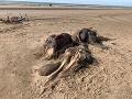 FOTO Žena objavila na pláži smradľavé monštrum: Anomália, ktorú rozlúskli až vedci