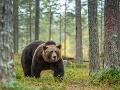 Experti radia, čo treba robiť v prípade stretu s medveďom: TOTO v žiadnom prípade nerobte!