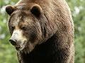 Pohyb medveďa v meste Vysoké Tatry súvisí s nezabezpečenými kontajnermi