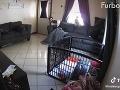 Majiteľka chcela vedieť, čo robia jej psy, keď nie je doma: VIDEO z kamery ju vydesilo, ale...