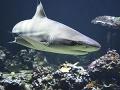 Neskutočná hrdinka: Tehotná žena zachránila manžela pred žralokom
