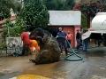 VIDEO Robotníci pri čistení kanalizácie zažili šok: Objavili gigantického potkana!