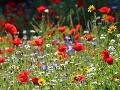 Vedci bijú na poplach: Neuveríte, čo sa deje s kvetmi po celom svete kvôli klimatickým zmenám