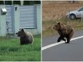Viktor prechádzal Turčianskymi Teplicami, keď mu cez cestu prebehol medveď: FOTO Jeho slová berú dych!