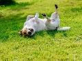 Majiteľ zverejnil FOTO svojho psa po tom, ako sa vyváľal v pokosenej tráve: To musíte vidieť!