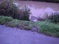 FOTO 28-ročná opitá vodička potopila auto v Biskupickom kanáli: Našťastie stihla vyplávať