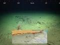 VIDEO Gigantický objav pod morskou hladinou v Austrálii: Toto sa nestalo už 120 rokov!
