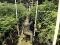 Voliči hlasovali počas volieb aj v referende: Podporili legalizáciu marihuany na rekreačné účely