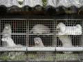 KORONAVÍRUS Tvrdé rozhodnutie Dánska: Parlament schválil ročný zákaz chovu noriek