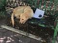 V parku našli psa s odkazom: VIDEO Pri čítaní riadkov neudržíte slzy