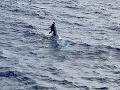 FOTO Záchrana v poslednej chvíli: Námorník sa držal trupu potopenej lode