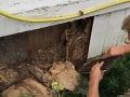 VIDEO Dvojica sa po roku rozhodla zrekonštruovať dom: To, čo v ňom objavili, im vyrazilo dych