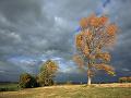 Pozor na silný vietor vo viacerých častiach Slovenska! Niektoré domácnosti hlásia problémy s elektrinou