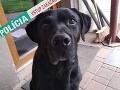 Smutný príbeh psíka z Podunajských Biskupíc: Nebol vhodným darčekom, odporné riešenie majiteľa
