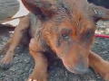 Hrôzostrašné ZÁBERY: Deti organizujú psie zápasy! Zúboženú fenku zachránili v poslednej chvíli