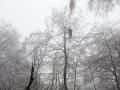 FOTO Paraglajdista uviazol na strome na Bukovej: Trnavskí hasiči ho zachraňovali päť hodín