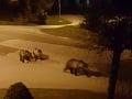 Situácia s medveďmi vo Vysokých Tatrách sa pravdepodobne zopakuje: TOTO je dôvod