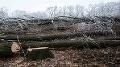 Polícia začala trestné stíhanie v prípade výrubu šiestich stromov v obci Ľubotín