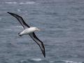 Z nemotorného albatrosa sa stala internetová hviezda: VIDEO jeho pristátia je hitom