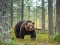 Medvede napáda neznáma choroba: Experti varujú, keď robia TOTO, nepribližujte sa k nim!