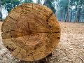 Vedci skúmali letokruhy stromov: Hrozivé odhalenie! Tento jav v Európe sa neudial už tisícročia