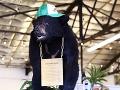 VIDEO Neuveriteľný príbeh: Medveď sa predávkoval kilami kokaínu od narkobaróna Pabla Escobara