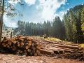FOTO Neznámy páchateľ vyrúbal takmer 150 stromov: Hrozí mu až trojročný pobyt za mrežami