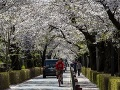 FOTO Sakury v Japonsku rozkvitli rekordne skoro: Podľa vedcov je to znamenie tejto katastrofy