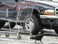 FOTO Zákazníci sa bránia pred nezvyčajnými zlodejmi: Krádeže priamo z vozíkov na parkovisku!