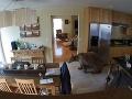 VIDEO Žena si zdriemla v obývačke, do domu zatiaľ vnikol medveď! Neuveríte, čo ho vyhnalo von