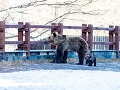 FOTO Na Hrebienku sa zjavila medvedia rodinka: Len pár metrov od nich boli turisti!