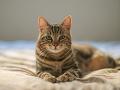 Mačka odrezala od elektriny polovicu mesta: Záchrana zvieraťa bola hotová dráma