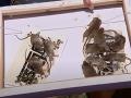 Austrália prežíva myšací mor