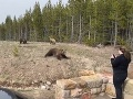 VIDEO Turistka provokovala medvediu rodinku v národnom parku: Krutá dohra, poriadne to oľutovala