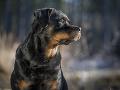 Držať psa na prostriedku na uväzovanie v domácnosti sa má zakázať