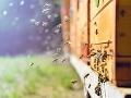 Minister Vlčan sa ohradil voči Budajovi: Agrorezort venuje ochrane včiel mimoriadnu pozornosť