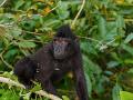 Varovali obyvateľov: Z českej ZOO utiekol samec opice! Môže byť nebezpečný