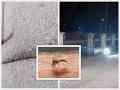 Pohroma v Chorvátsku: Oblasť zaplavili roje komárov, z pohľadu na VIDEO sa robí nevoľno!