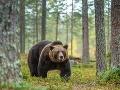 MIMORIADNE Pitva potvrdila šokujúcu pravdu! Prvé úmrtie po útoku medveďa na Liptove