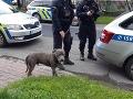Hrôza v reštaurácii v Česku: Malé dievčatko pohryzol pes bez náhubku, majiteľka bola opitá!