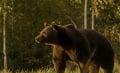 Smrteľný útok medveďa vyvolal