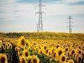 Nová zbraň proti rádioaktivite vo Fukušime: Slnečnice!