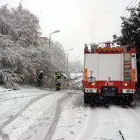 Hasiči v Bratislave v nedeľu odstraňovali z cesty aj strom, ktorý spadol pod ťarchou snehu.