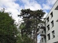 Posledné byty v ponuke bytového domu Forest Park