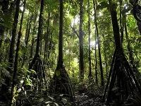Chodiace stromy v ekvádorskom pralese