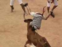 Američana nabral na rohy býk