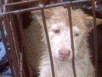 Smutný pohľad na utýraného psíka