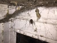Slovák v garáži objavil hororového pavúka na FOTO  Príbuzná čiernej vdovy 7f5b4258e38